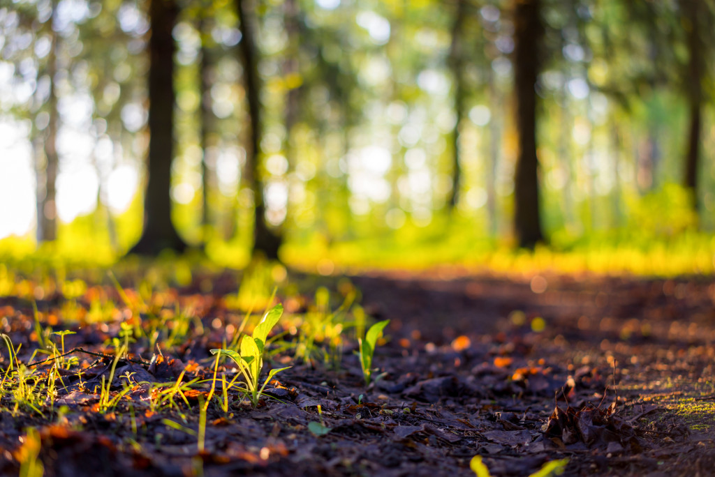 Can Your Business Help Protect the Environment?